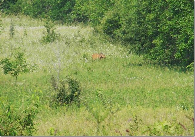 Deer Photos 019