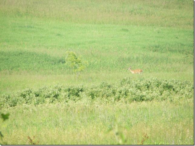 Deer Photos 020