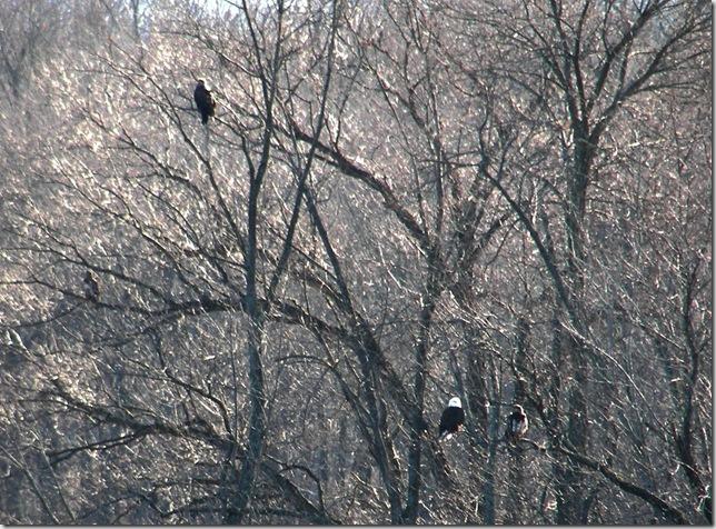 Eagle Family 2