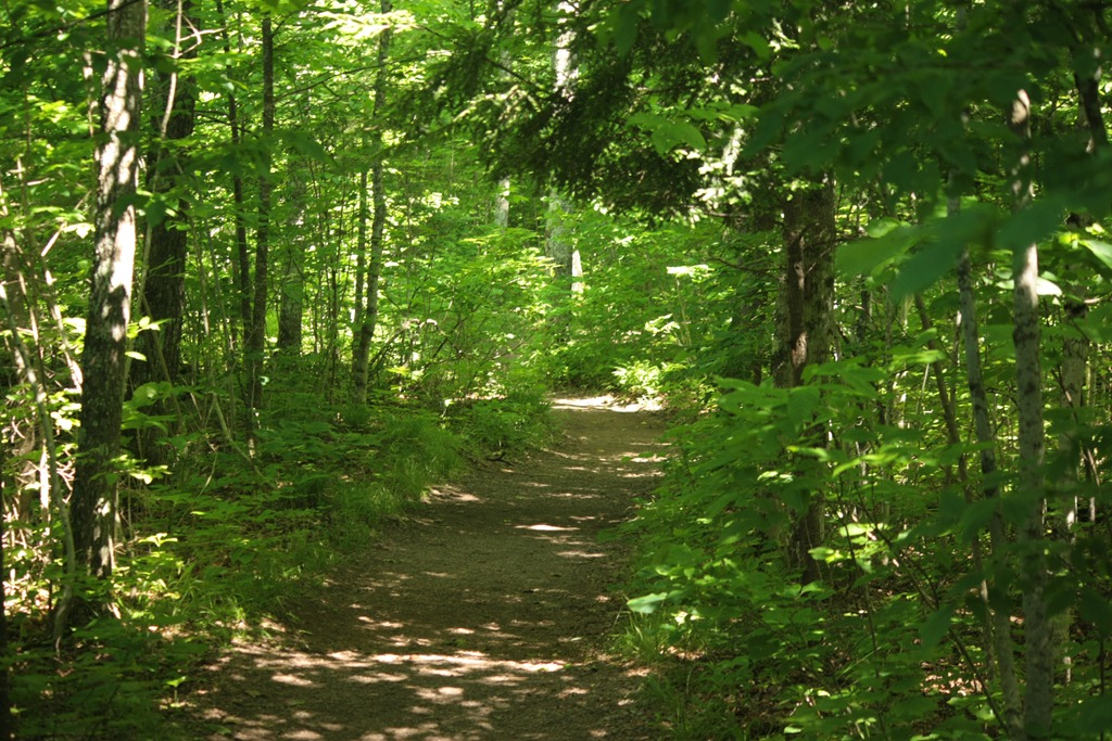 Chequamegon-Nicolet National Forest | The Trail