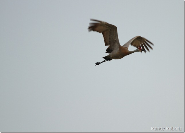 IMG_5627a
