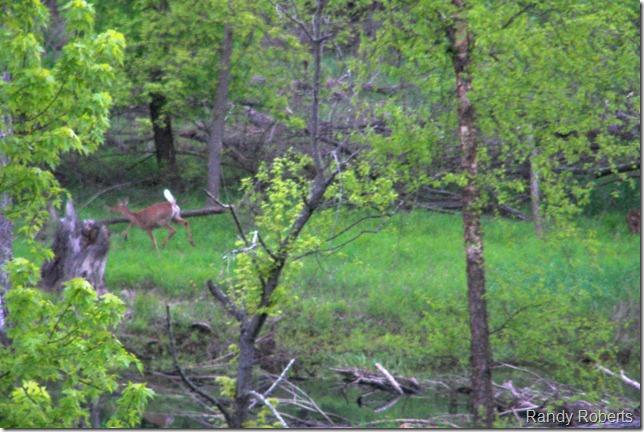 River Deer IV